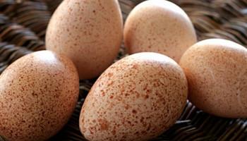 Рекомендуемый режим инкубации индюшиных яиц (до 200шт.)